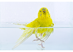 Bird Bath Apology Analogy